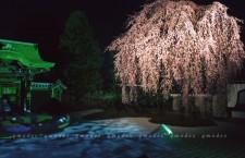 高台寺春季夜間亮燈活動 配燈光投影表演